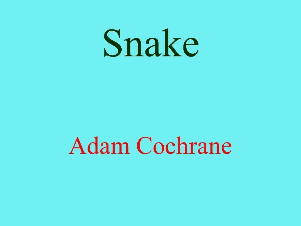 Snake Adam Cochrane