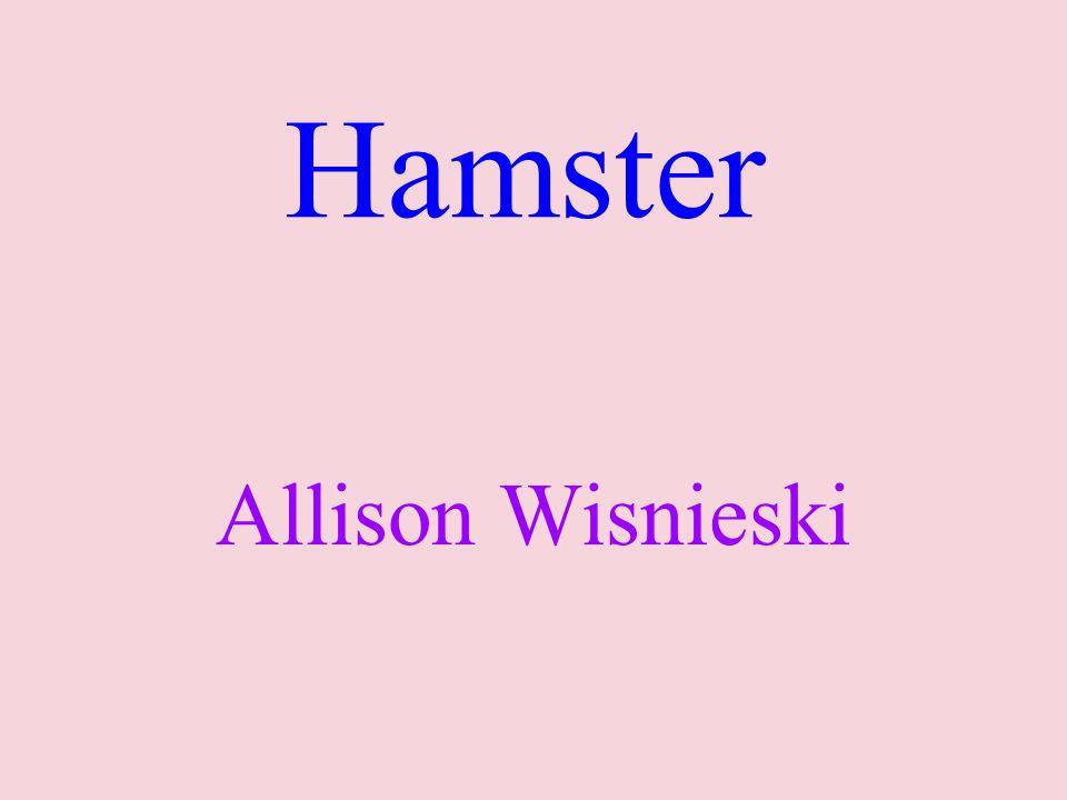 Hamster Allison Wisnieski