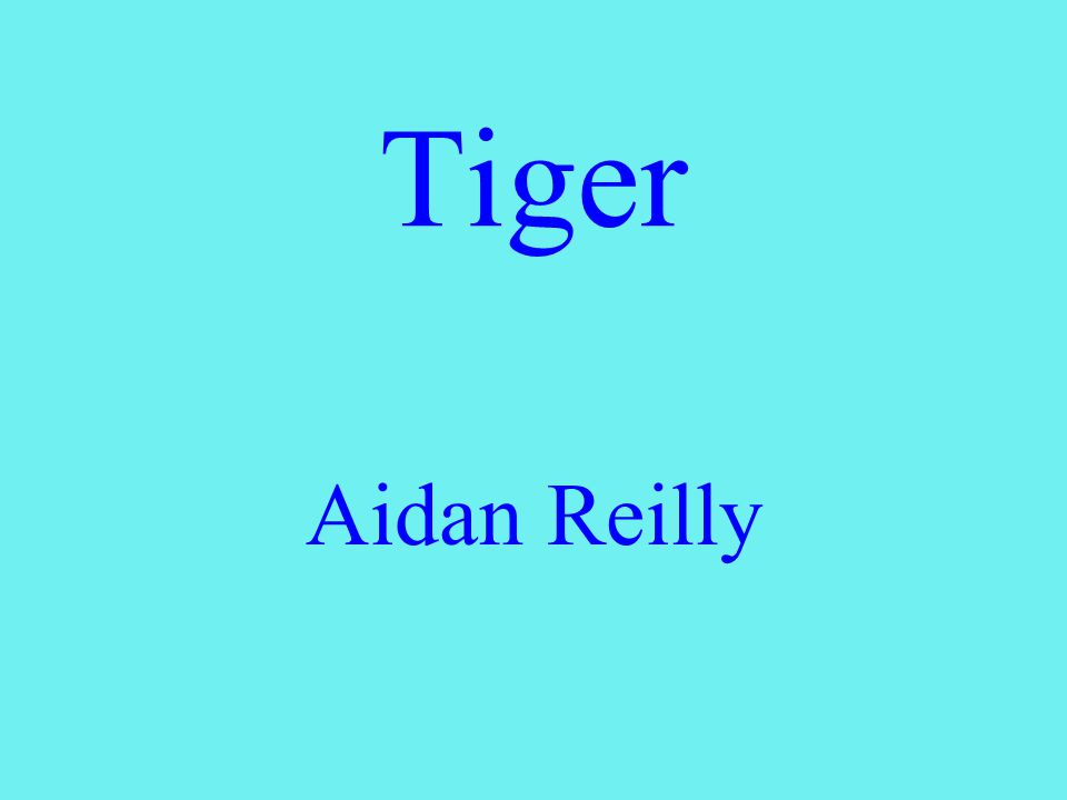 Tiger Aidan Reilly