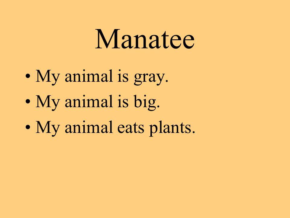 Manatee My animal is gray. My animal is big. My animal eats plants.