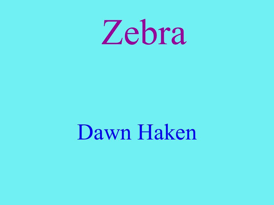 Zebra Dawn Haken