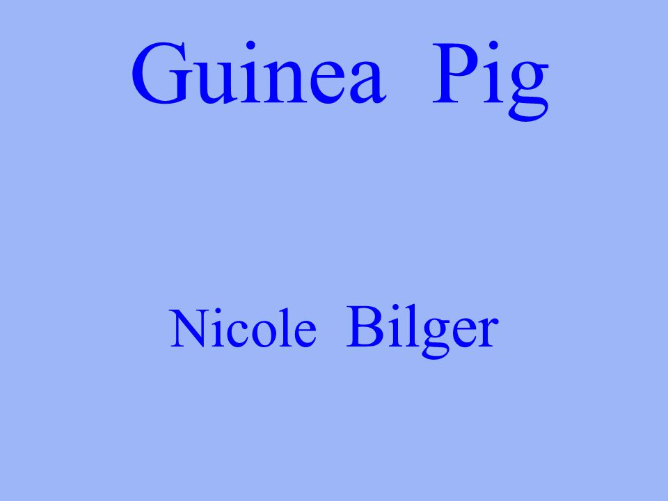 Guinea Pig Nicole Bilger