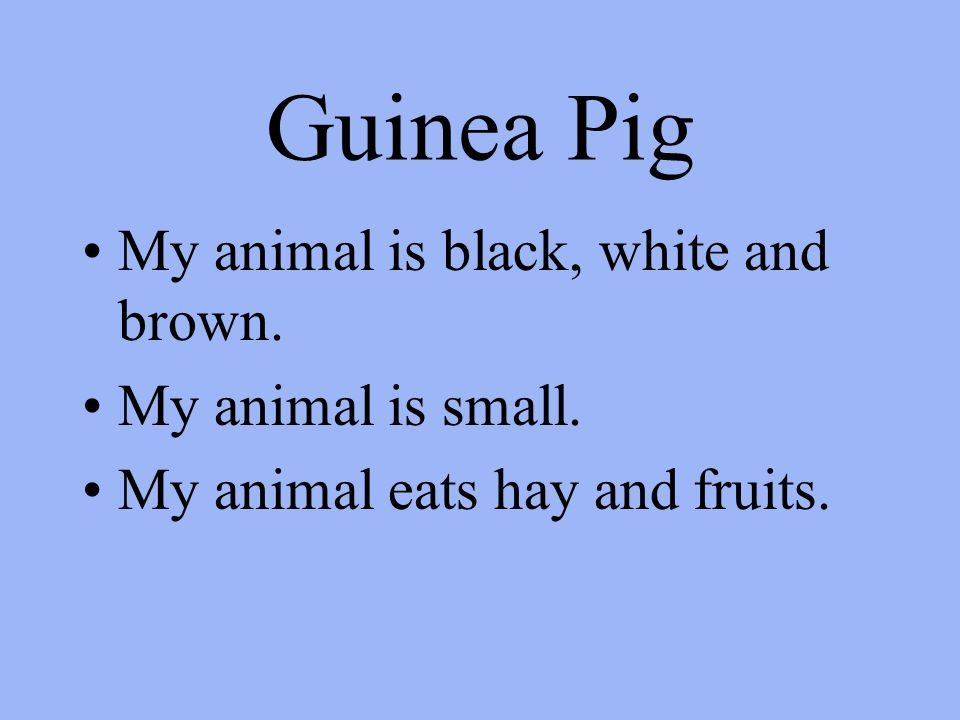 Guinea Pig My animal is black, white and brown. My animal is small. My animal eats hay and fruits.