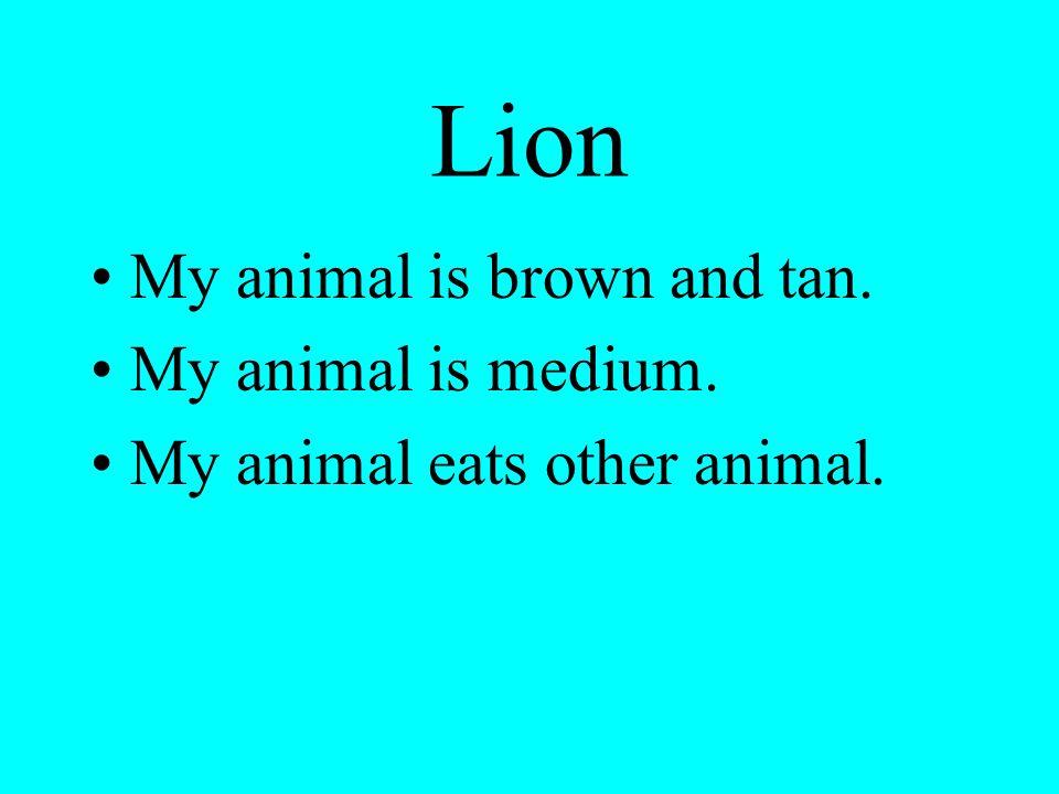 Lion My animal is brown and tan. My animal is medium. My animal eats other animal.