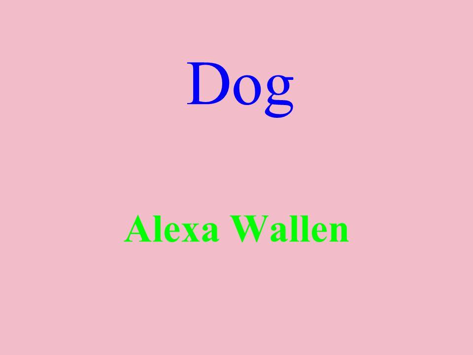 Dog Alexa Wallen