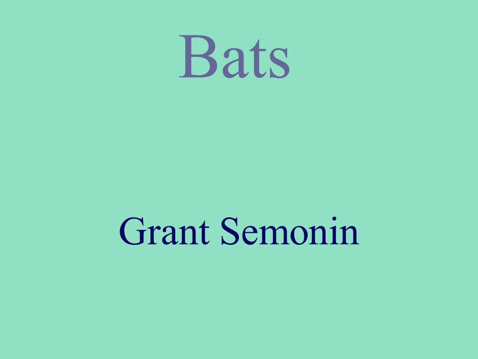 Bats Grant Semonin