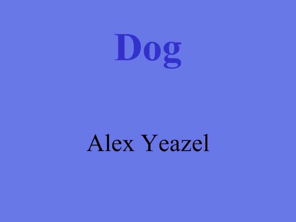 Dog Alex Yeazel