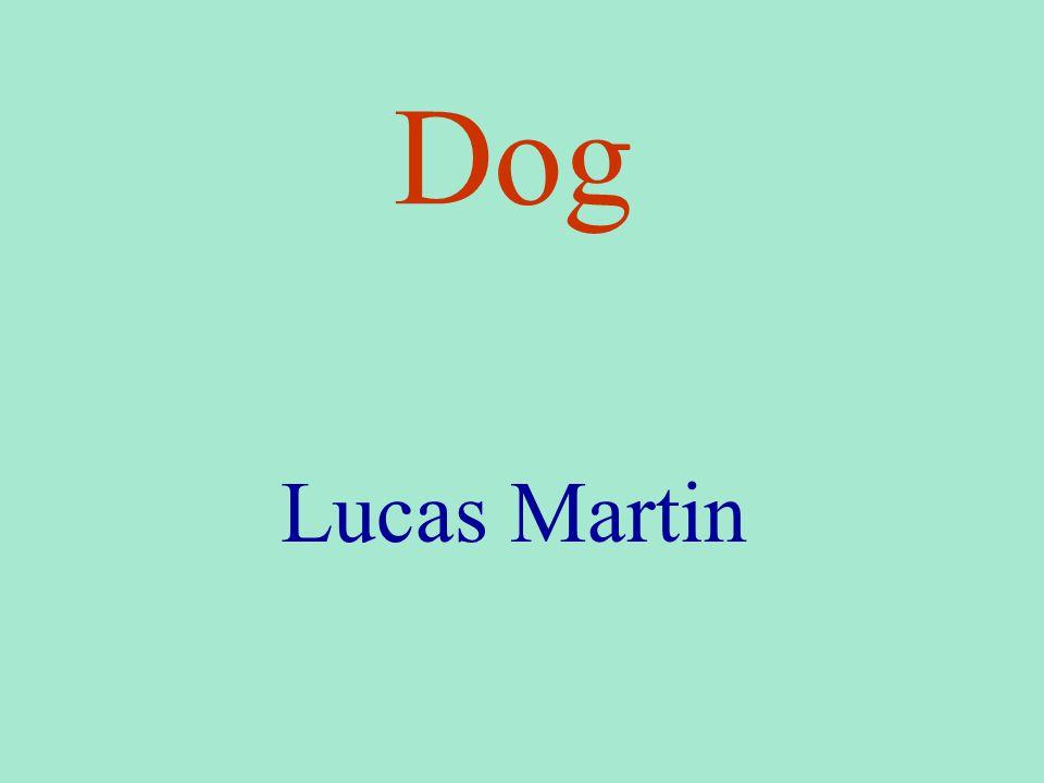 Dog Lucas Martin
