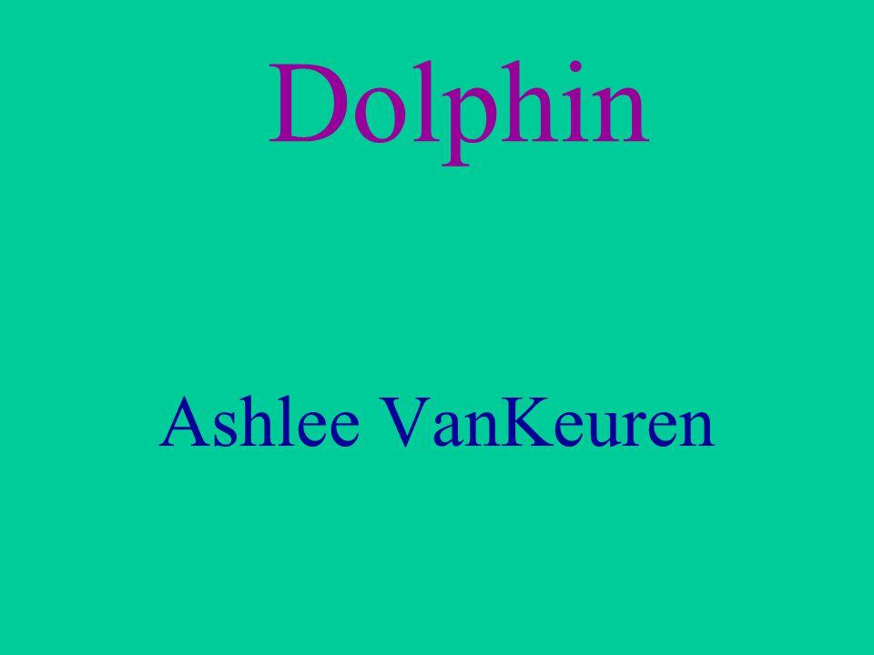 Dolphin Ashlee VanKeuren