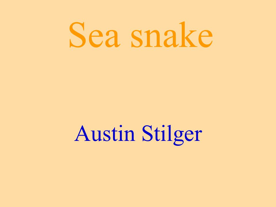 Sea snake Austin Stilger
