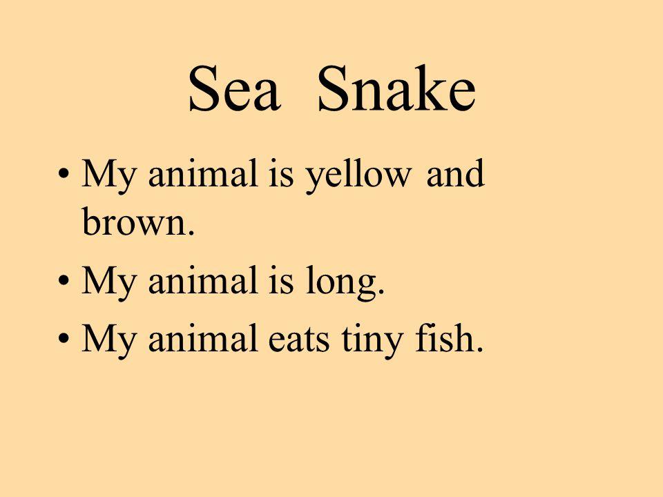 Sea Snake My animal is yellow and brown. My animal is long. My animal eats tiny fish.
