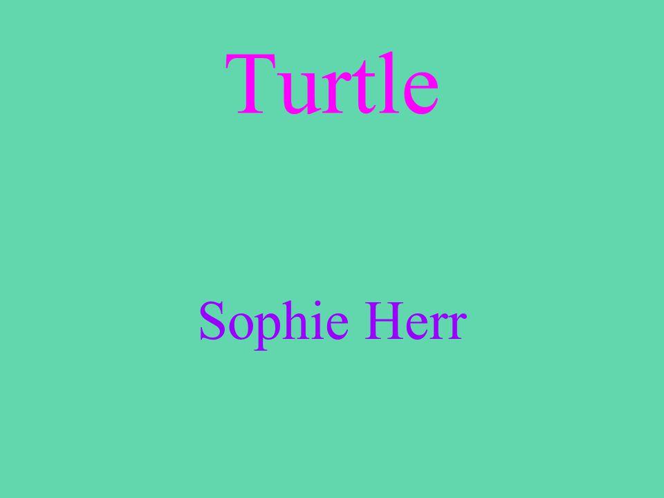 Turtle Sophie Herr