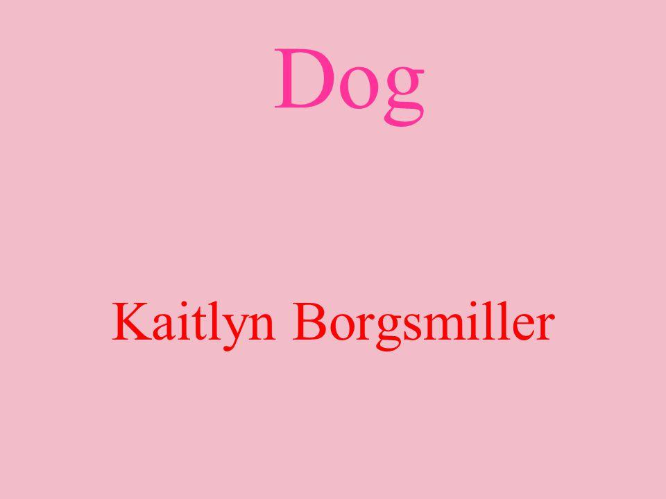 Dog Kaitlyn Borgsmiller
