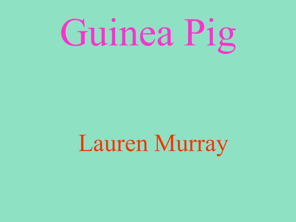 Guinea Pig Lauren Murray