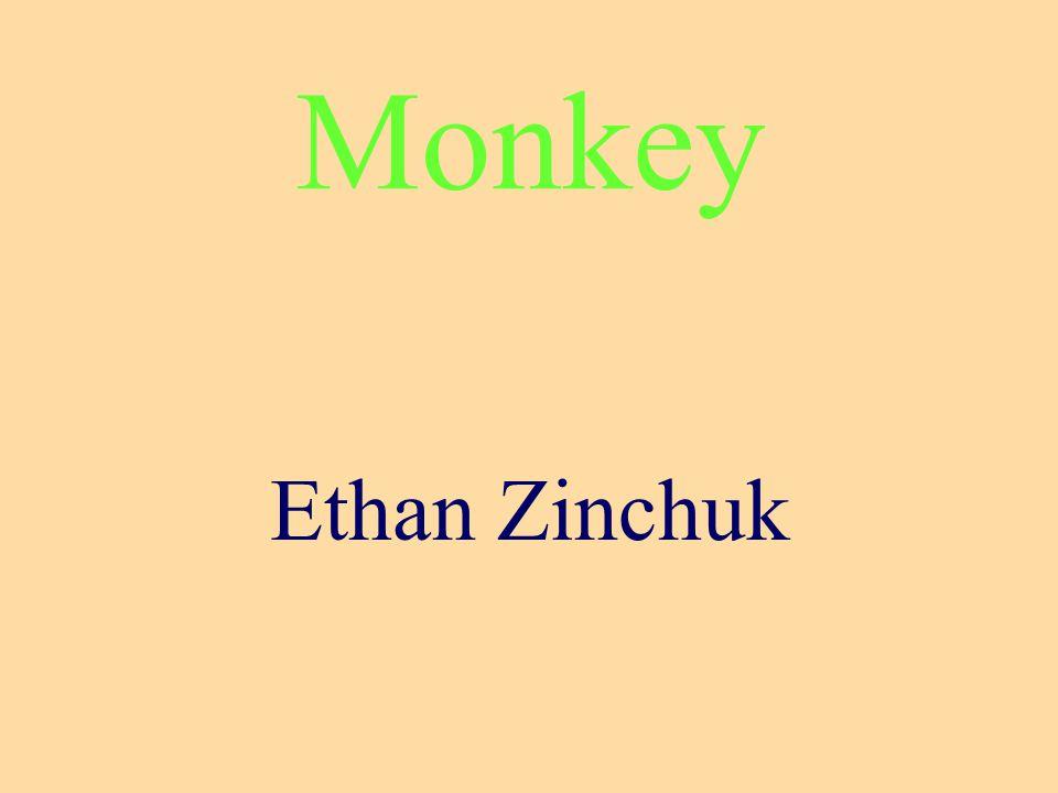 Monkey Ethan Zinchuk
