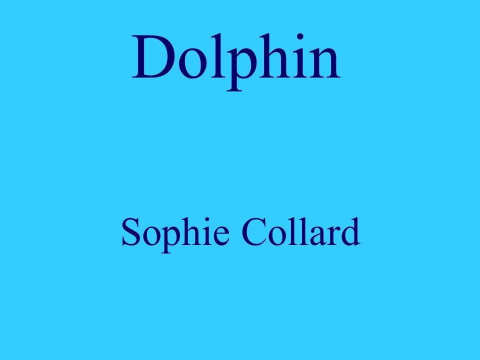 Dolphin Sophie Collard