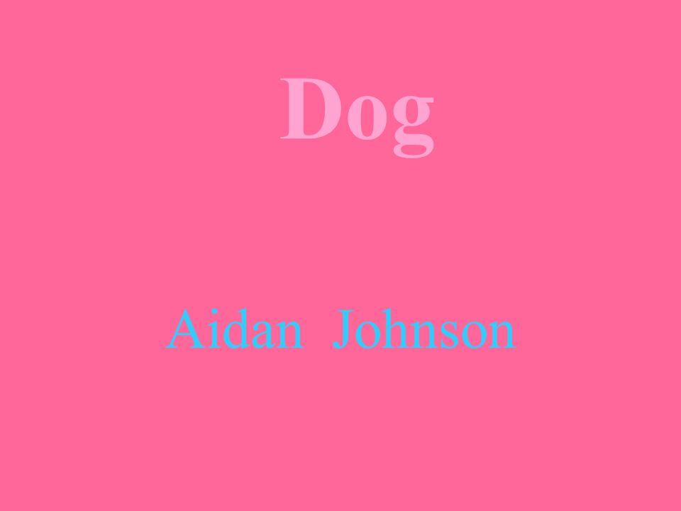 Dog Aidan Johnson