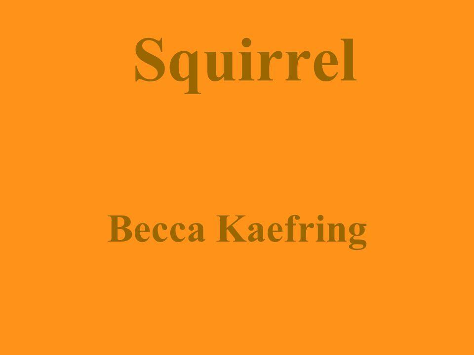 Squirrel Becca Kaefring