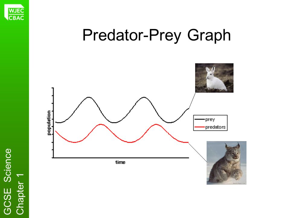 Predator-Prey Graph GCSE ScienceChapter 1