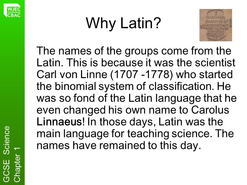 Why Latin? The names of the groups come from the Latin. This is because it was the scientist Carl von Linne (1707 -1778) who started the binomial syst