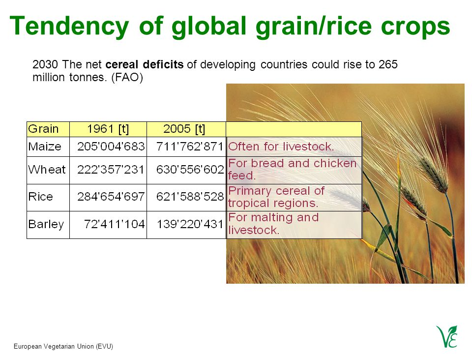European Vegetarian Union (EVU) Tendency of global grain/rice crops 2030 The net cereal deficits of developing countries could rise to 265 million tonnes.