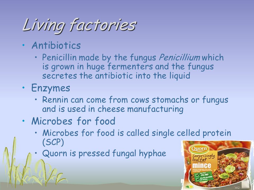 Living factories Antibiotics Penicillin made by the fungus Penicillium which is grown in huge fermenters and the fungus secretes the antibiotic into t