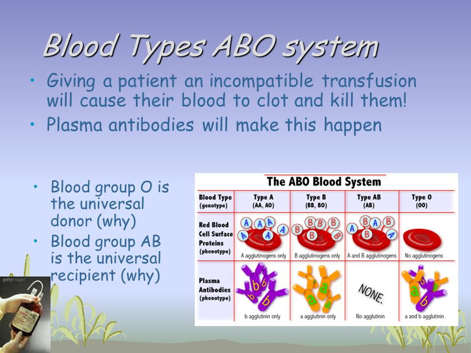 Blood Types ABO system Blood group O is the universal donor (why) Blood group AB is the universal recipient (why) Giving a patient an incompatible tra