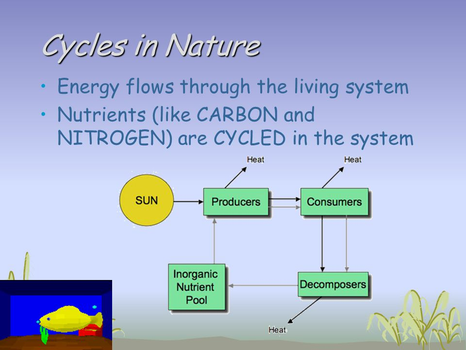 Cycles in Nature Energy flows through the living system Nutrients (like CARBON and NITROGEN) are CYCLED in the system