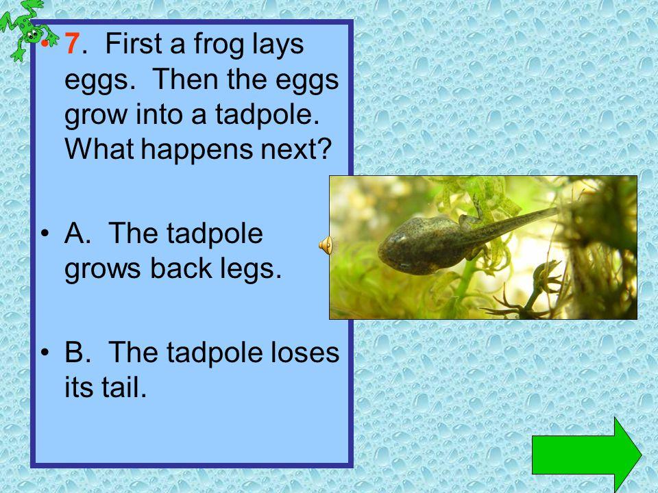 6. How does a tadpole swim? A. It wiggles its head. B. It wiggles its tail. head tail