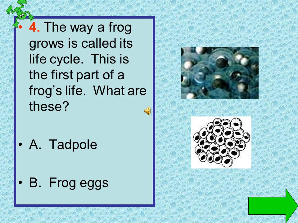 4.The way a frog grows is called its life cycle. This is the first part of a frogs life.