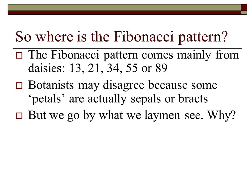 So where is the Fibonacci pattern? The Fibonacci pattern comes mainly from daisies: 13, 21, 34, 55 or 89 Botanists may disagree because some petals ar