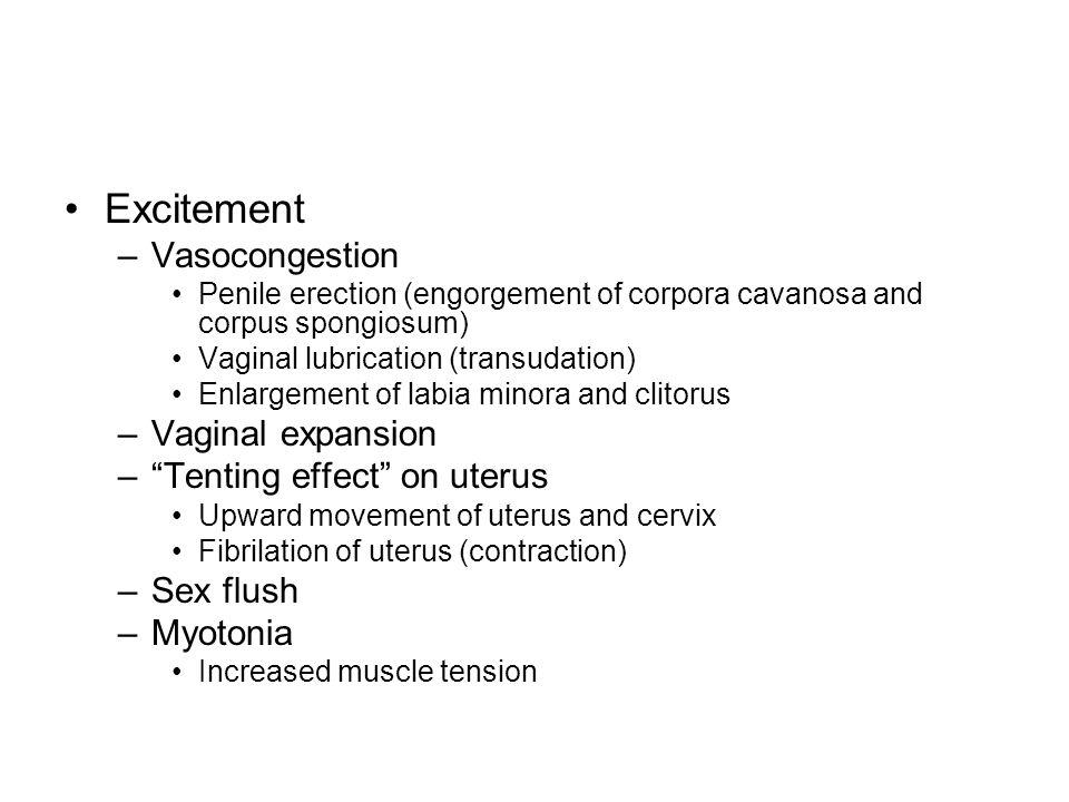 Excitement –Vasocongestion Penile erection (engorgement of corpora cavanosa and corpus spongiosum) Vaginal lubrication (transudation) Enlargement of l