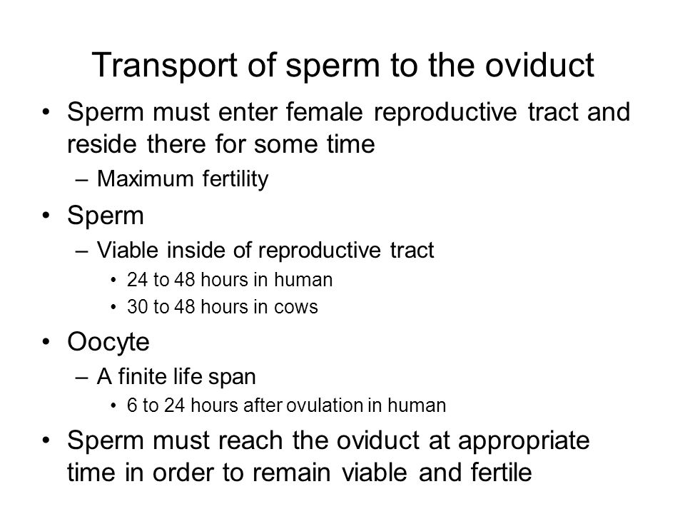 Transport of sperm to the oviduct Sperm must enter female reproductive tract and reside there for some time –Maximum fertility Sperm –Viable inside of