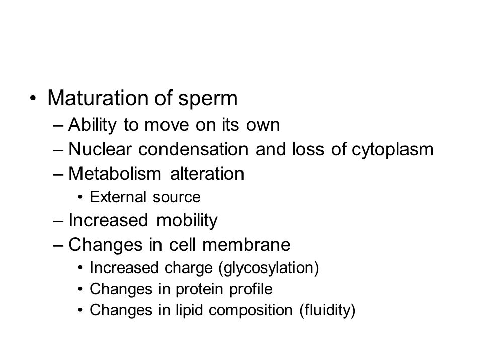Maturation of sperm –Ability to move on its own –Nuclear condensation and loss of cytoplasm –Metabolism alteration External source –Increased mobility