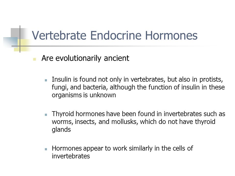 Vertebrate Endocrine Hormones Are evolutionarily ancient Insulin is found not only in vertebrates, but also in protists, fungi, and bacteria, although