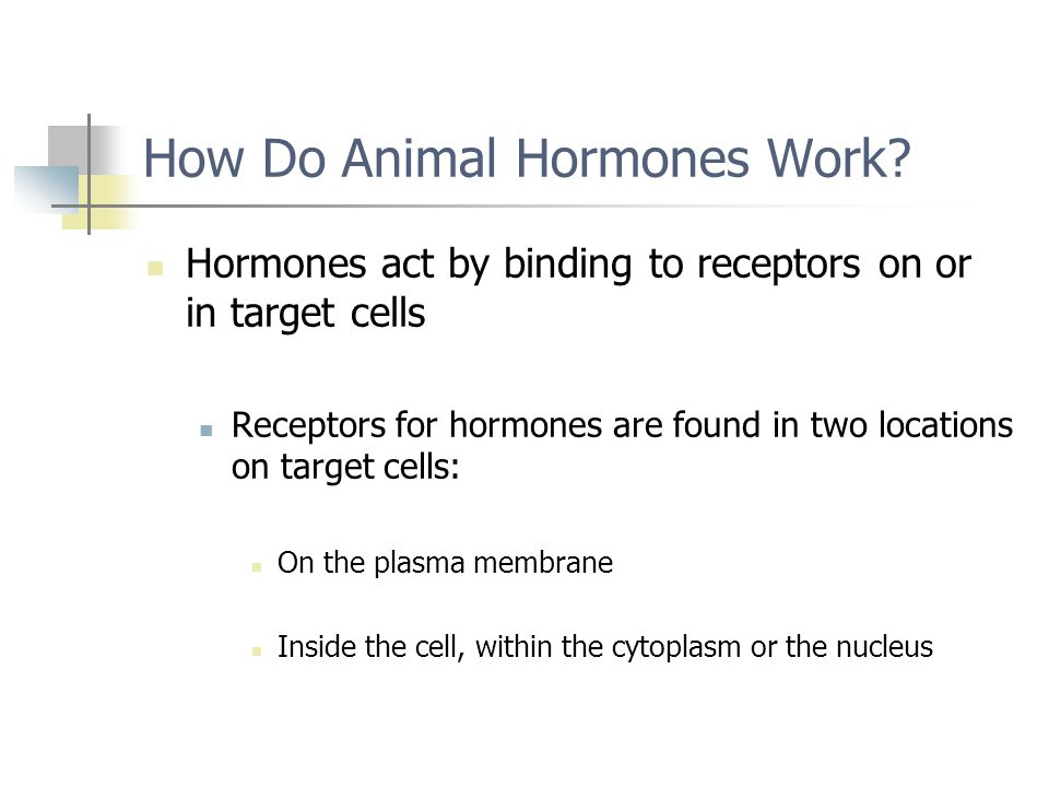 How Do Animal Hormones Work? Hormones act by binding to receptors on or in target cells Receptors for hormones are found in two locations on target ce
