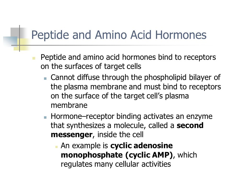 Peptide and Amino Acid Hormones Peptide and amino acid hormones bind to receptors on the surfaces of target cells Cannot diffuse through the phospholi