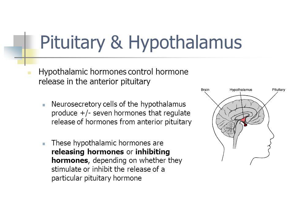 Pituitary & Hypothalamus Hypothalamic hormones control hormone release in the anterior pituitary Neurosecretory cells of the hypothalamus produce +/-
