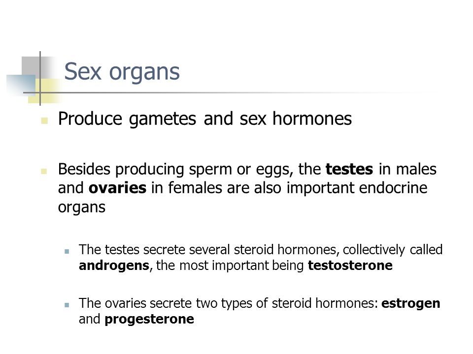 Sex organs Produce gametes and sex hormones Besides producing sperm or eggs, the testes in males and ovaries in females are also important endocrine o