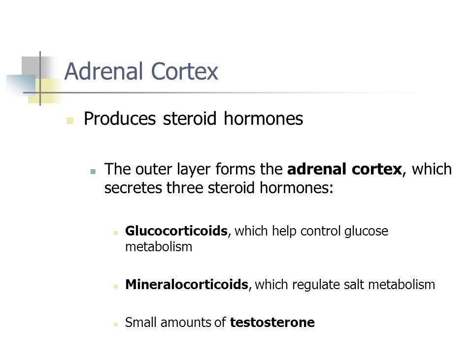 Adrenal Cortex Produces steroid hormones The outer layer forms the adrenal cortex, which secretes three steroid hormones: Glucocorticoids, which help