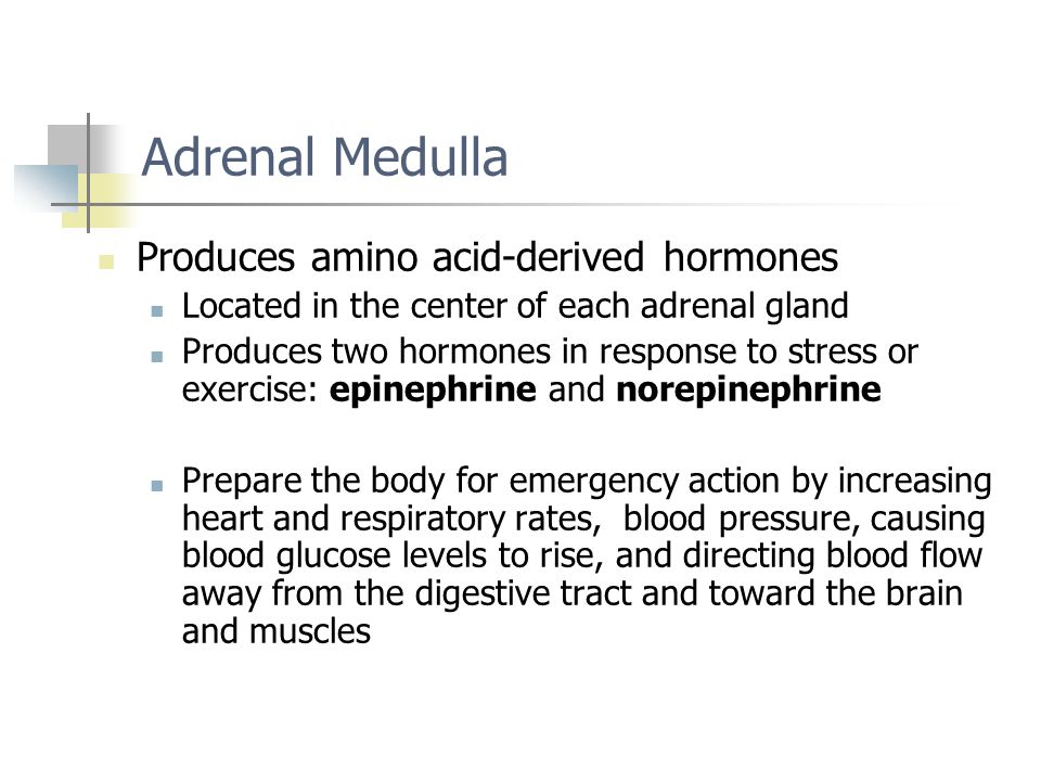 Adrenal Medulla Produces amino acid-derived hormones Located in the center of each adrenal gland Produces two hormones in response to stress or exerci