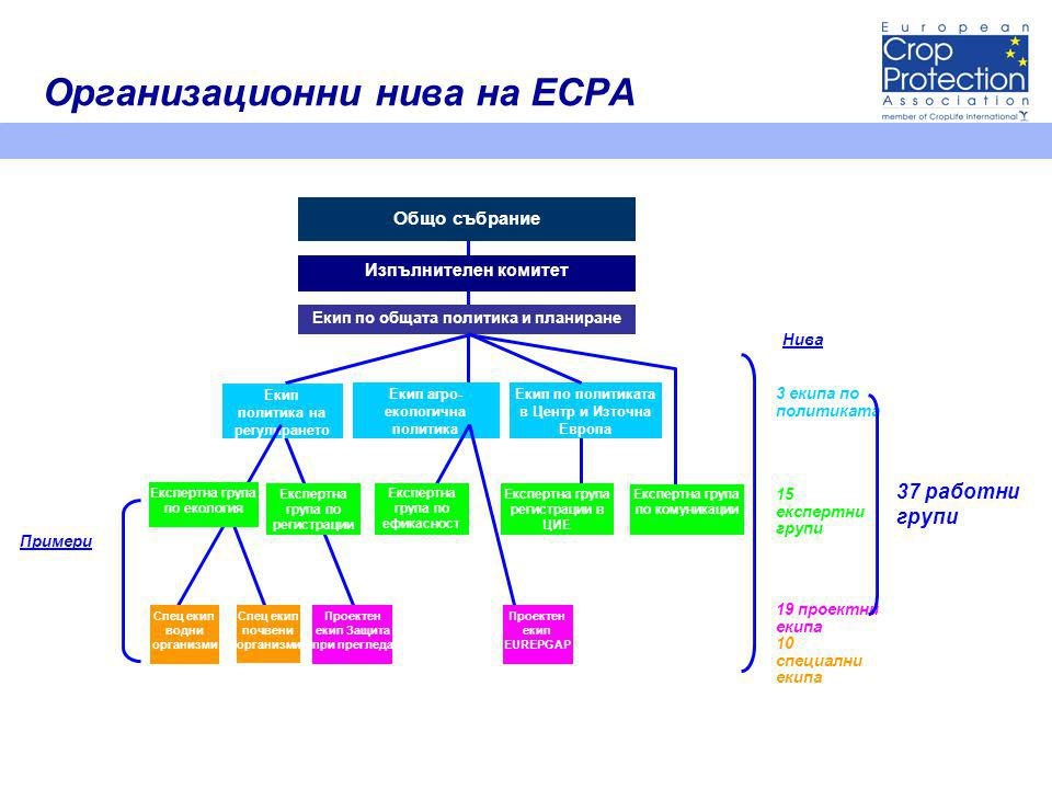 Организационни нива на ECPA Общо събрание Изпълнителен комитет Екип по общата политика и планиране Екип политика на регулирането Екип агро- екологична политика Екип по политиката в Центр и Източна Европа Експертна група екология Експертна група по регистрации Експертна група по ефикасност Експертна група регистрации в ЦИЕ Експертна група по комуникации Спец екип водни организми Спец екип почвени организми Проектен екип Защита при прегледа Проектен екип EUREPGAP Примери Нива 3 екипа по политиката 15 експертни групи 19 проектни екипа 10 специални екипа 37 работни групи Експертна група по екология