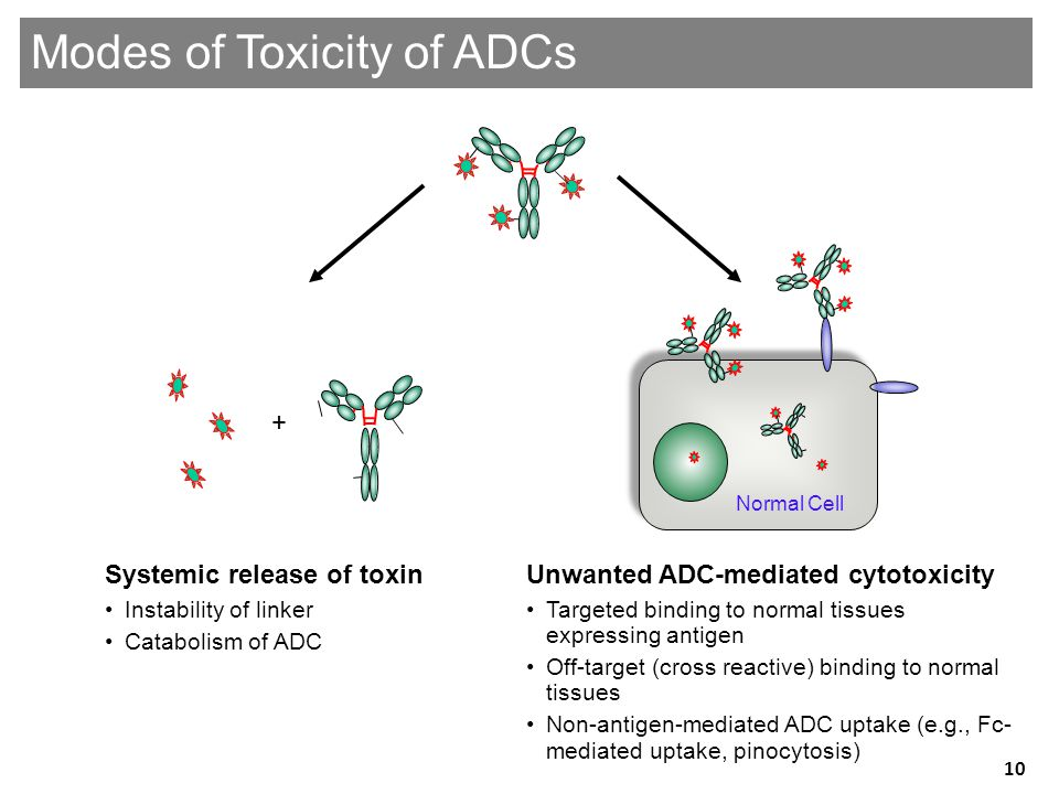 Genentech Confidential—Internal Use Only Unwanted ADC-mediated cytotoxicity •Targeted binding to normal tissues expressing antigen •Off-target (cross reactive) binding to normal tissues •Non-antigen-mediated ADC uptake (e.g., Fc- mediated uptake, pinocytosis) Systemic release of toxin •Instability of linker •Catabolism of ADC + Modes of Toxicity of ADCs Normal Cell 10