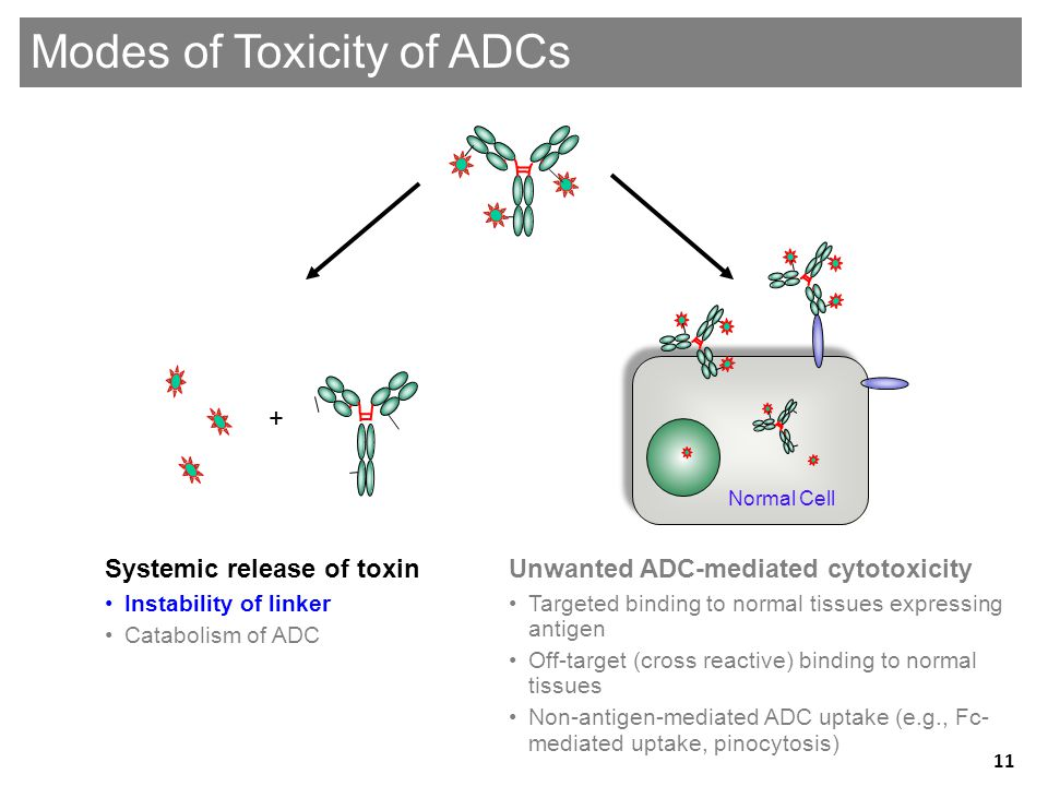 Genentech Confidential—Internal Use Only Unwanted ADC-mediated cytotoxicity •Targeted binding to normal tissues expressing antigen •Off-target (cross reactive) binding to normal tissues •Non-antigen-mediated ADC uptake (e.g., Fc- mediated uptake, pinocytosis) Systemic release of toxin •Instability of linker •Catabolism of ADC + Modes of Toxicity of ADCs Normal Cell 11