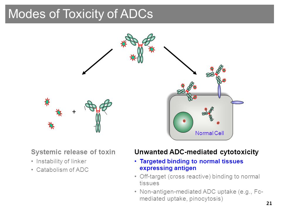 Unwanted ADC-mediated cytotoxicity •Targeted binding to normal tissues expressing antigen •Off-target (cross reactive) binding to normal tissues •Non-