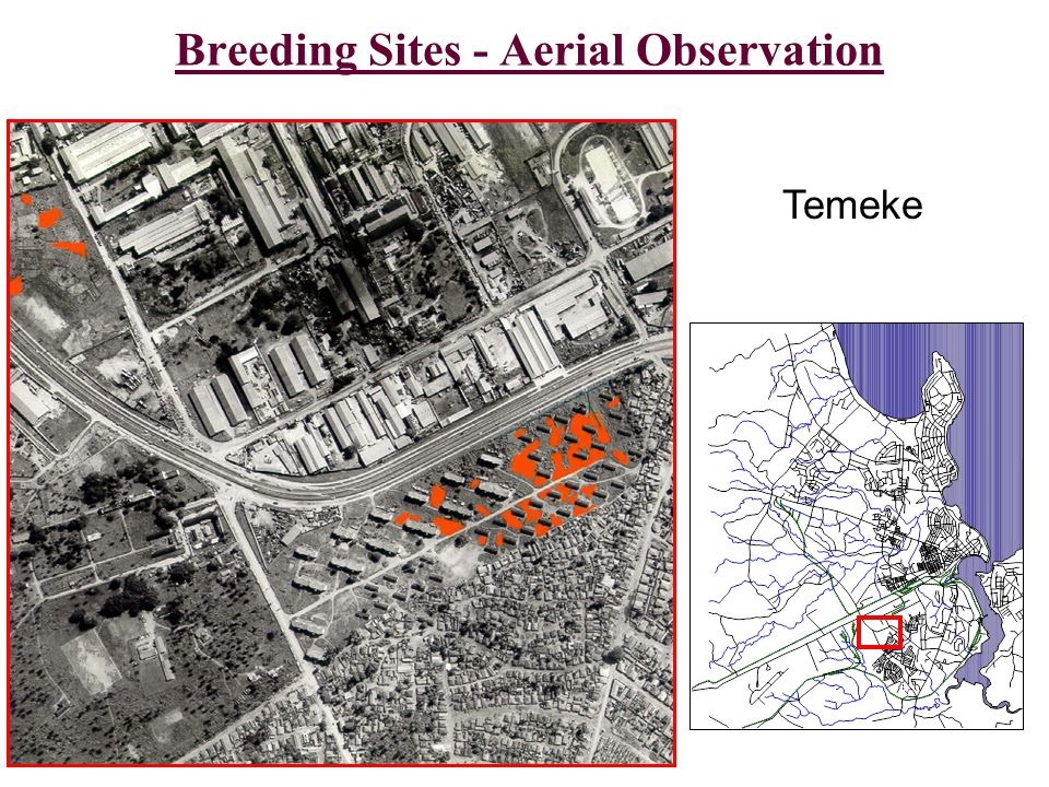 Breeding Sites - Aerial Observation Temeke