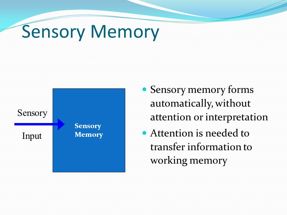Sensory Memory  Sensory memory forms automatically, without attention or interpretation  Attention is needed to transfer information to working memory Sensory Input Sensory Memory