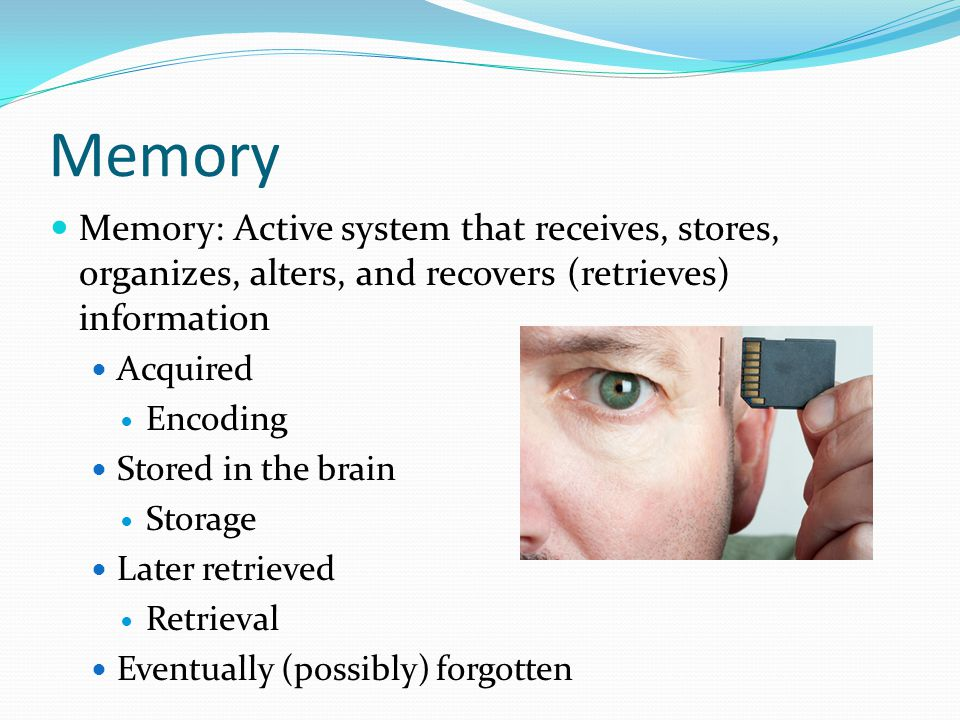 Memory  Memory: Active system that receives, stores, organizes, alters, and recovers (retrieves) information  Acquired  Encoding  Stored in the brain  Storage  Later retrieved  Retrieval  Eventually (possibly) forgotten