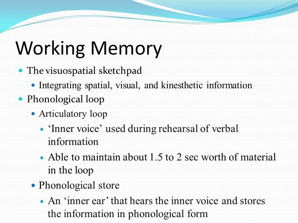 Working Memory  The visuospatial sketchpad  Integrating spatial, visual, and kinesthetic information  Phonological loop  Articulatory loop  'Inne