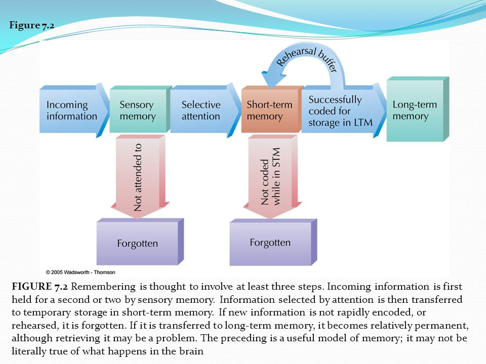 Figure 7.2 FIGURE 7.2 Remembering is thought to involve at least three steps. Incoming information is first held for a second or two by sensory memory